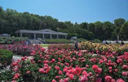 バラの花が咲く都立神代植物公園内の画像