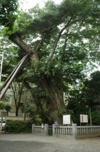 shishitei-tennen_42_aoikeyaki-t